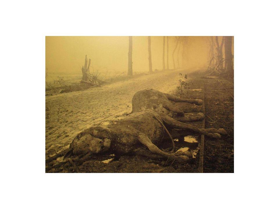 Karl Kraus: Die letzten Tage der Menschheit (1921/22): Und Ihre Blutzeugenschaft wird die Schinder und Schänder der Kreatur lauter anklagen als das Martertum der Menschen; denn sie waren stumm.