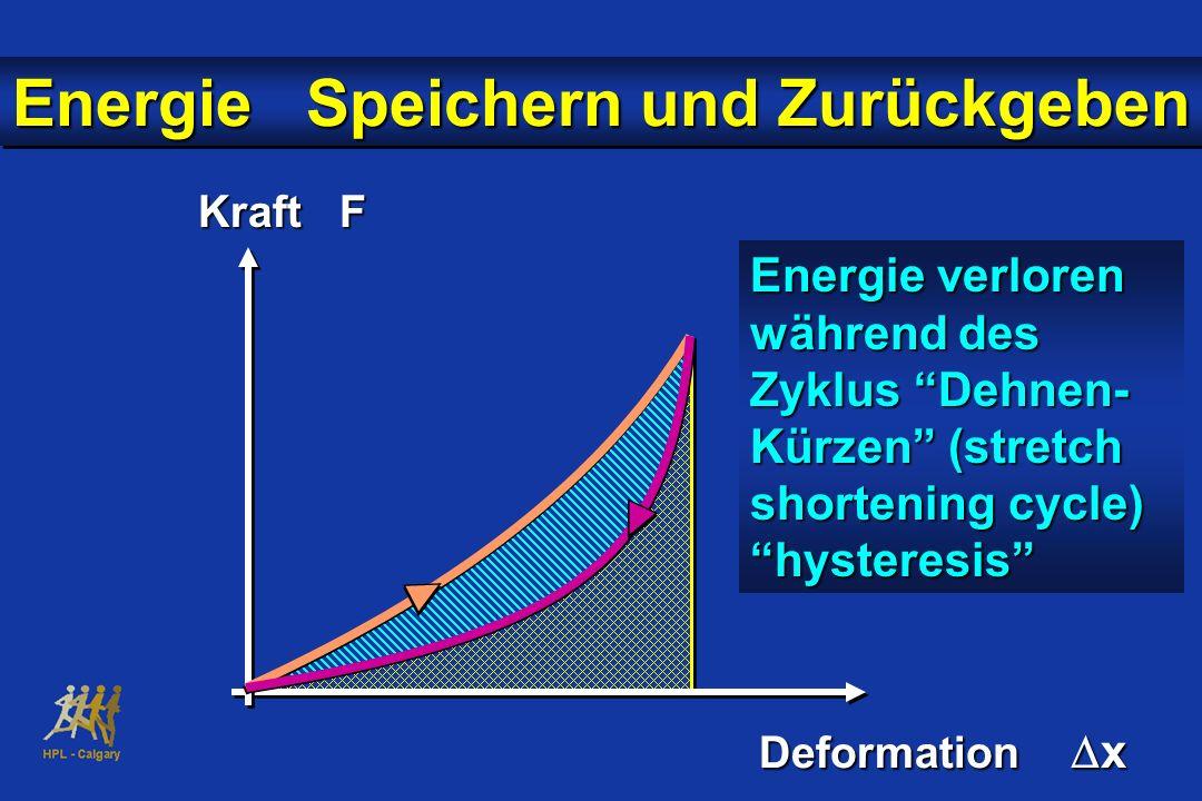 Kraft F Deformation x Energie verloren während des Zyklus Dehnen- Kürzen (stretch shortening cycle) hysteresis Energie Speichern und Zurückgeben