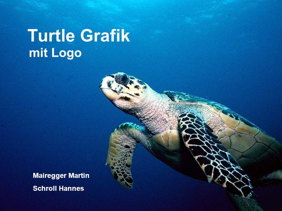 Turtle Grafik mit Logo Mairegger Martin Schroll Hannes