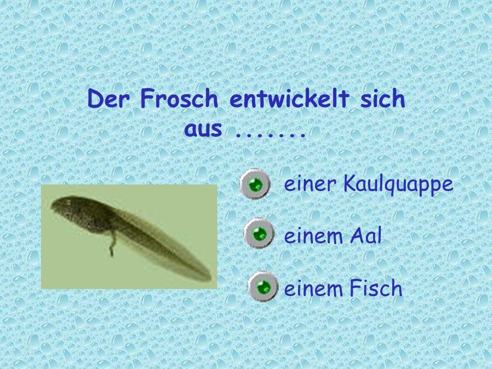Der Frosch entwickelt sich aus....... einer Kaulquappe einem Aal einem Fisch