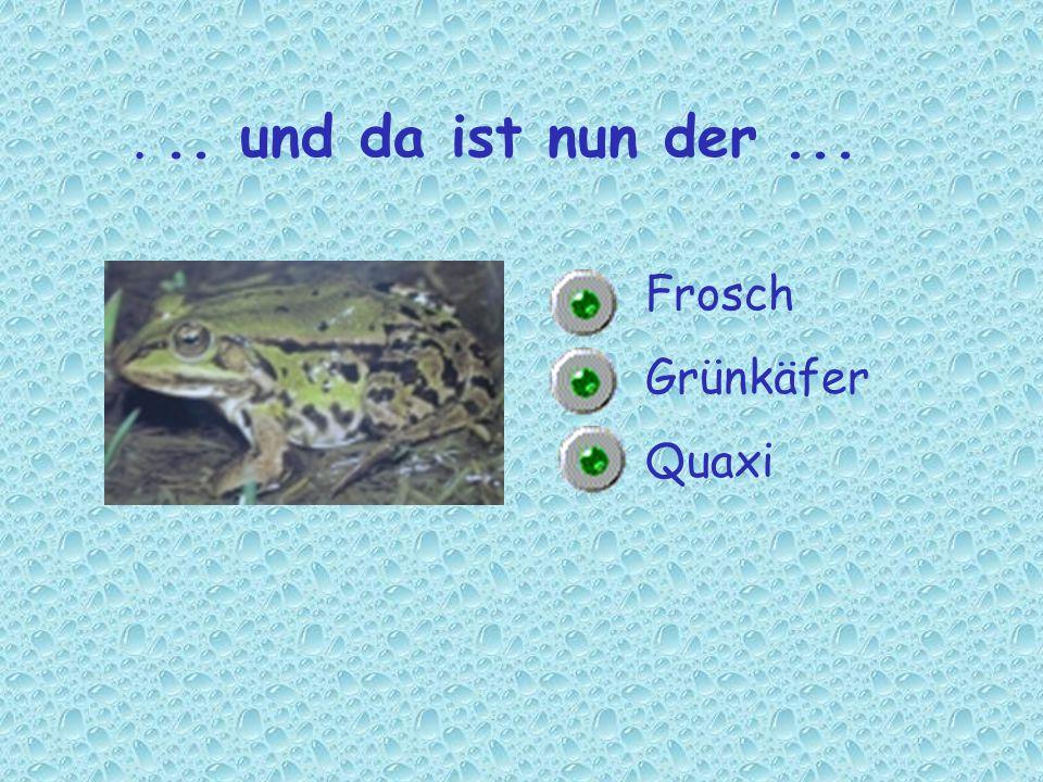 Frosch Grünkäfer Quaxi... und da ist nun der...