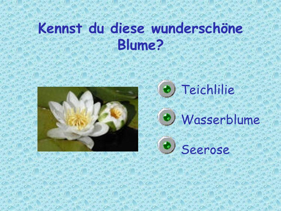 Kennst du diese wunderschöne Blume? Teichlilie Wasserblume Seerose