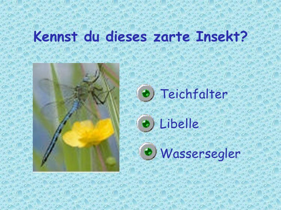 Kennst du dieses zarte Insekt? Teichfalter Libelle Wassersegler