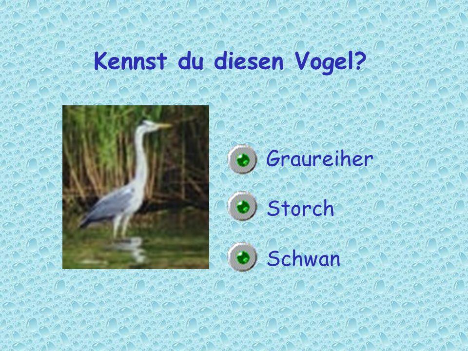 Kennst du diesen Vogel? Graureiher Storch Schwan