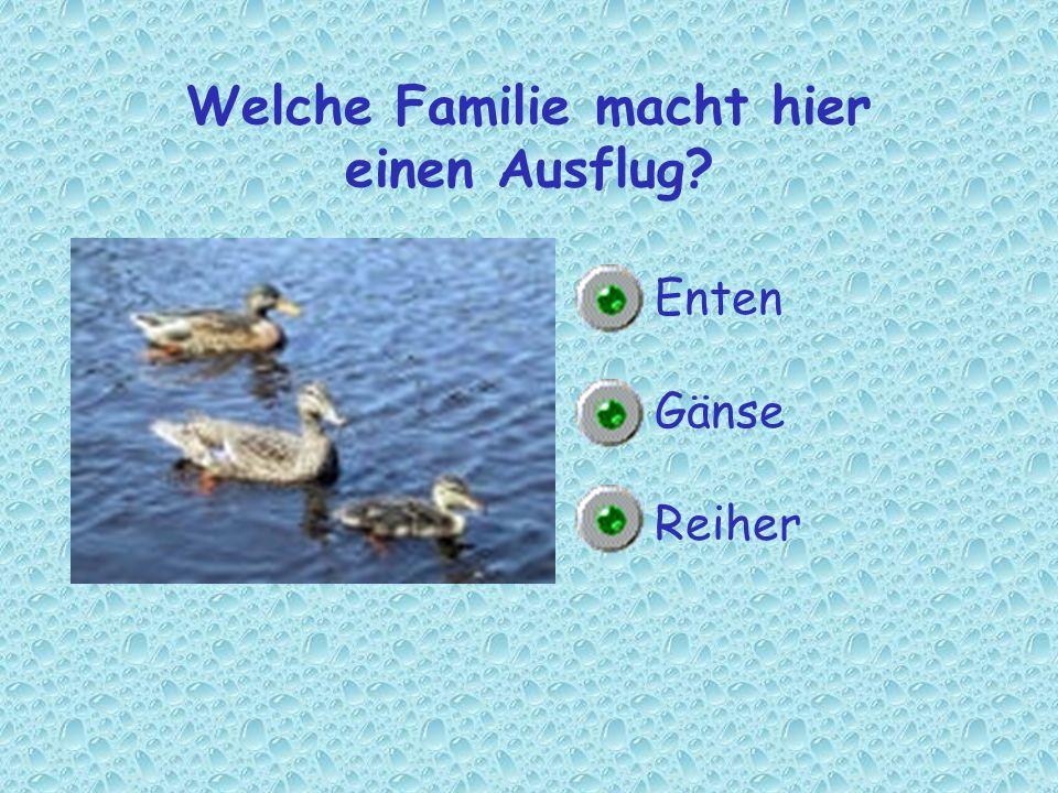 Welche Familie macht hier einen Ausflug? Enten Gänse Reiher
