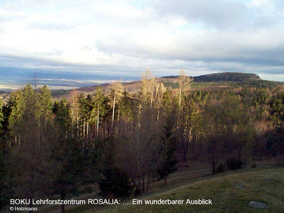 BOKU Lehrforstzentrum ROSALIA:.... Im Hintergrund der Schneeberg © Holzmann