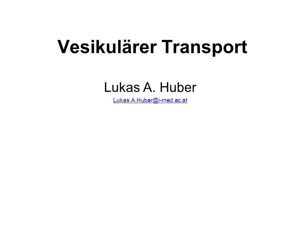 Vesikulärer Transport Lukas A. Huber Lukas.A.Huber@i-med.ac.at