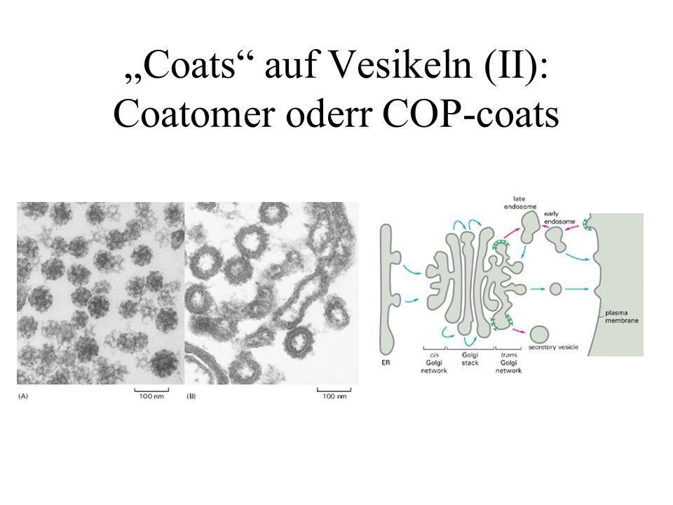 Coats auf Vesikeln (II): Coatomer oderr COP-coats