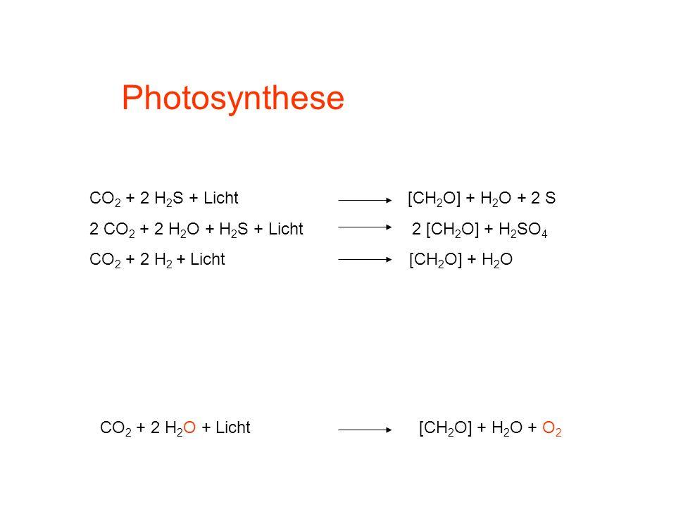 Photosynthese CO 2 + 2 H 2 S + Licht [CH 2 O] + H 2 O + 2 S 2 CO 2 + 2 H 2 O + H 2 S + Licht 2 [CH 2 O] + H 2 SO 4 CO 2 + 2 H 2 + Licht [CH 2 O] + H 2