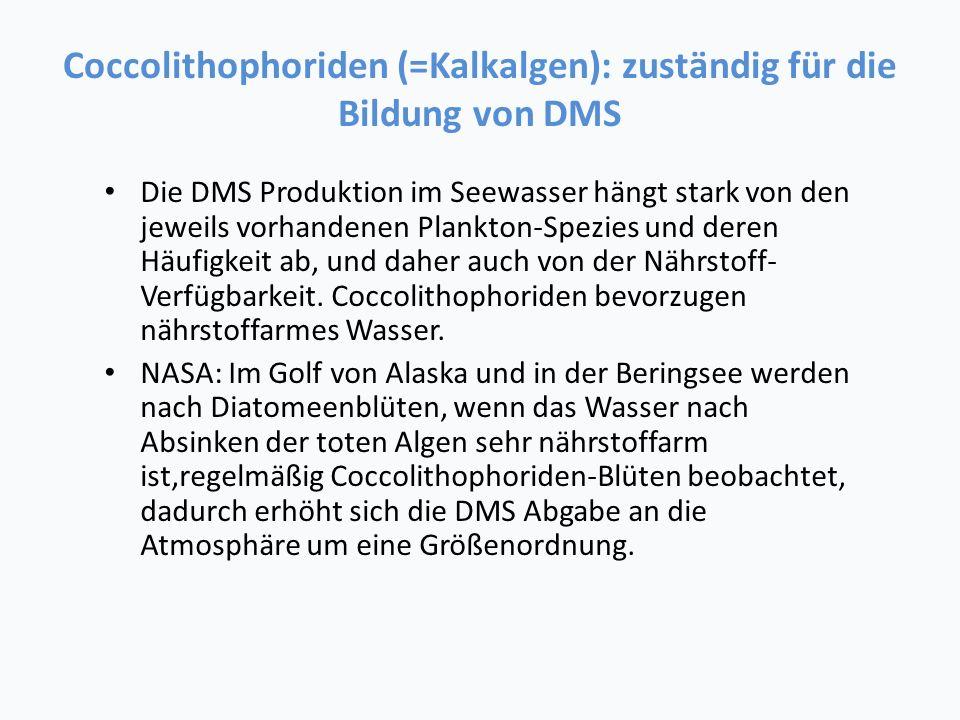 Coccolithophoriden (=Kalkalgen): zuständig für die Bildung von DMS Die DMS Produktion im Seewasser hängt stark von den jeweils vorhandenen Plankton-Spezies und deren Häufigkeit ab, und daher auch von der Nährstoff- Verfügbarkeit.