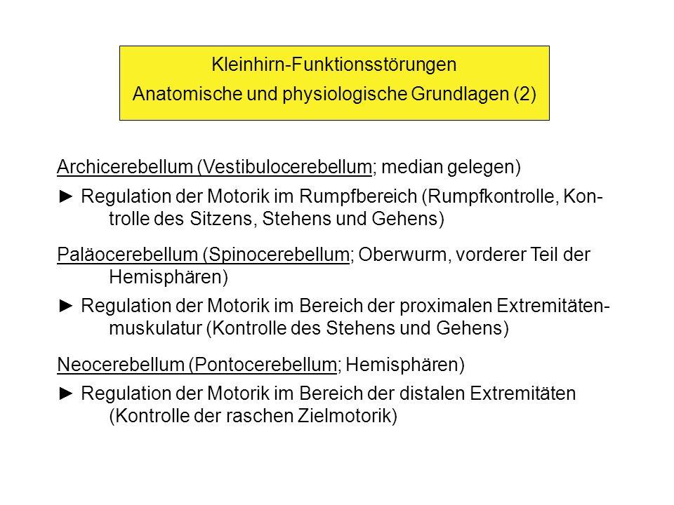 Kleinhirn-Funktionsstörungen Anatomische und physiologische Grundlagen (2) Archicerebellum (Vestibulocerebellum; median gelegen) Regulation der Motorik im Rumpfbereich (Rumpfkontrolle, Kon- trolle des Sitzens, Stehens und Gehens) Paläocerebellum (Spinocerebellum; Oberwurm, vorderer Teil der Hemisphären) Regulation der Motorik im Bereich der proximalen Extremitäten- muskulatur (Kontrolle des Stehens und Gehens) Neocerebellum (Pontocerebellum; Hemisphären) Regulation der Motorik im Bereich der distalen Extremitäten (Kontrolle der raschen Zielmotorik)