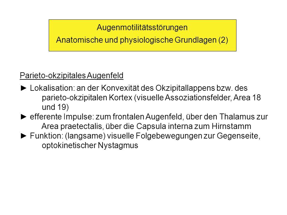 Augenmotilitätsstörungen Anatomische und physiologische Grundlagen (2) Parieto-okzipitales Augenfeld Lokalisation: an der Konvexität des Okzipitallappens bzw.