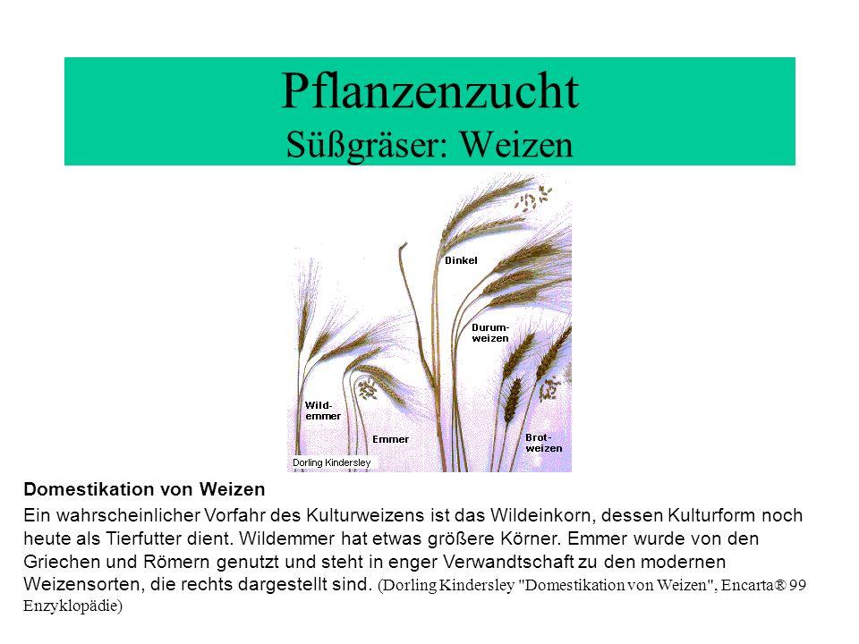 Pflanzenzucht Süßgräser: Weizen Domestikation von Weizen Ein wahrscheinlicher Vorfahr des Kulturweizens ist das Wildeinkorn, dessen Kulturform noch he