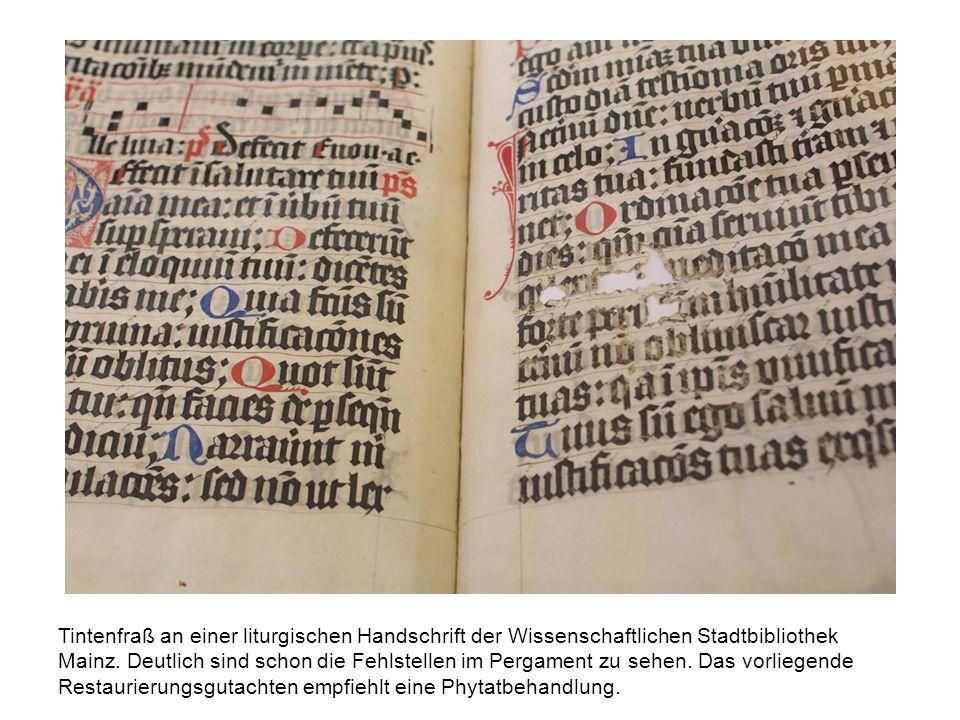Tintenfraß an einer liturgischen Handschrift der Wissenschaftlichen Stadtbibliothek Mainz. Deutlich sind schon die Fehlstellen im Pergament zu sehen.