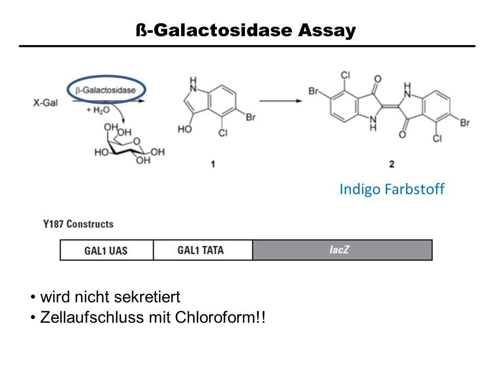 ß-Galactosidase Assay Indigo Farbstoff wird nicht sekretiert Zellaufschluss mit Chloroform!!
