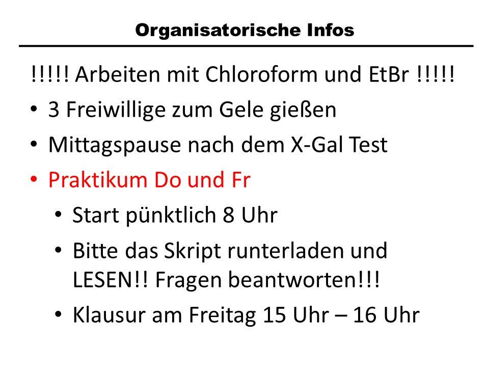 Organisatorische Infos !!!!! Arbeiten mit Chloroform und EtBr !!!!! 3 Freiwillige zum Gele gießen Mittagspause nach dem X-Gal Test Praktikum Do und Fr