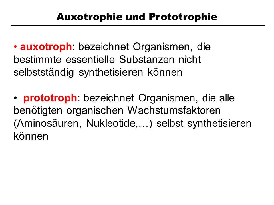 Auxotrophie und Prototrophie auxotroph: bezeichnet Organismen, die bestimmte essentielle Substanzen nicht selbstständig synthetisieren können prototro