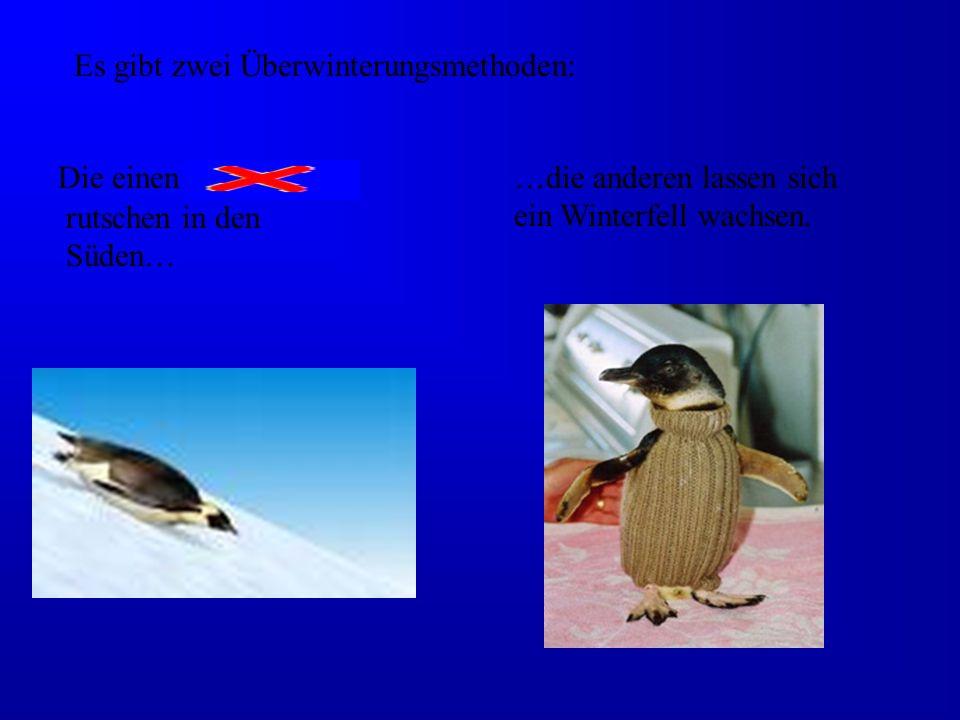 Es gibt zwei Überwinterungsmethoden: Die einen fliegen rutschen in den Süden… …die anderen lassen sich ein Winterfell wachsen.