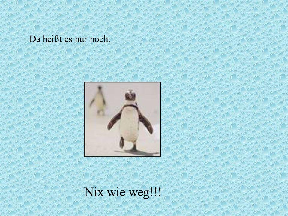 Da heißt es nur noch: Nix wie weg!!!
