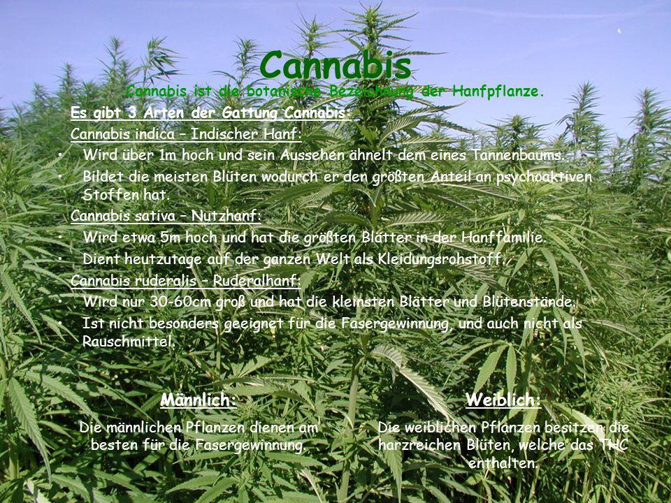 Cannabis Cannabis ist die botanische Bezeichnung der Hanfpflanze.