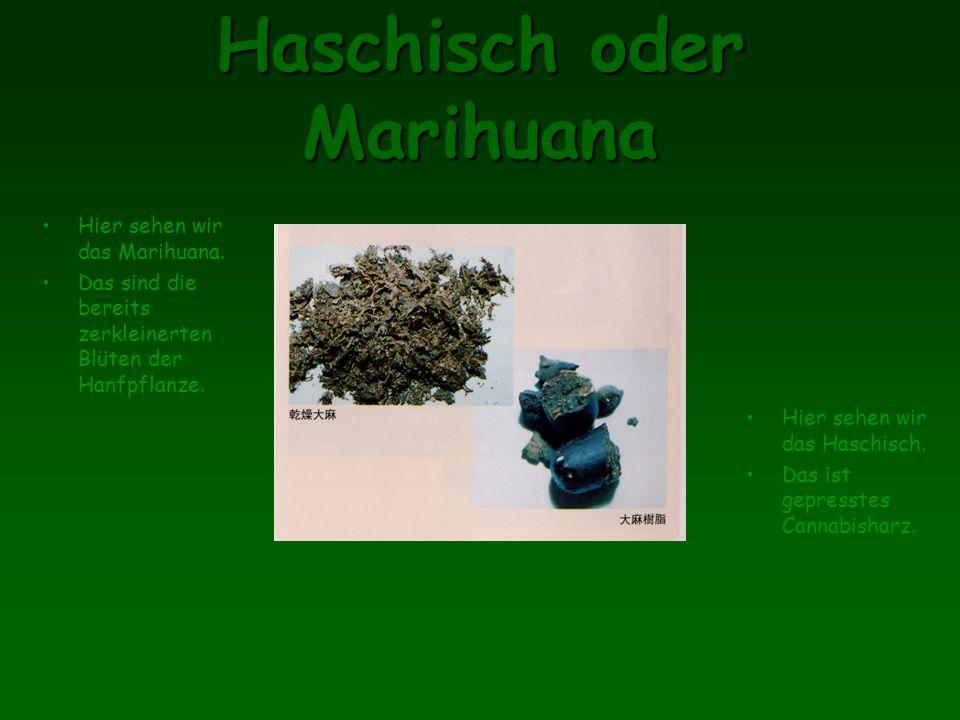 Haschisch oder Marihuana Hier sehen wir das Marihuana.