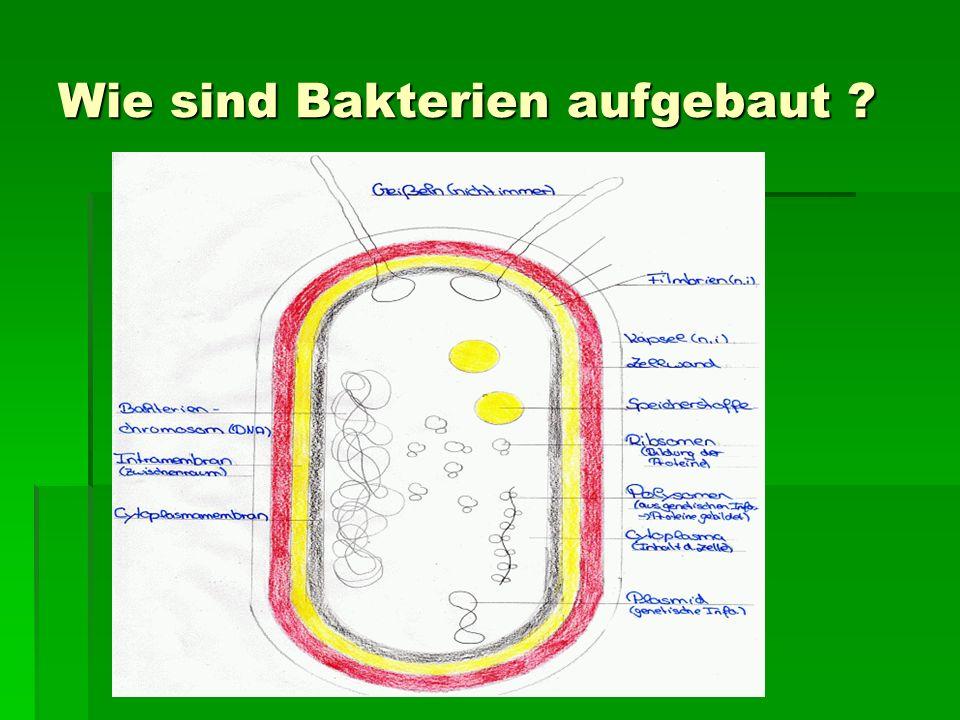 Wie sind Bakterien aufgebaut ?
