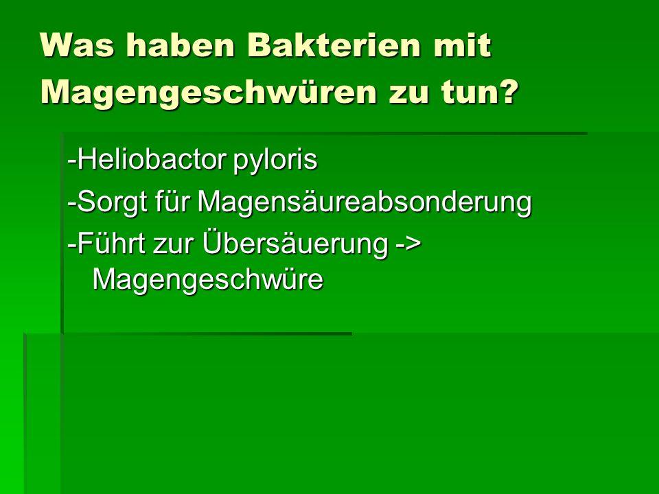 Was haben Bakterien mit Magengeschwüren zu tun? -Heliobactor pyloris -Sorgt für Magensäureabsonderung -Führt zur Übersäuerung -> Magengeschwüre