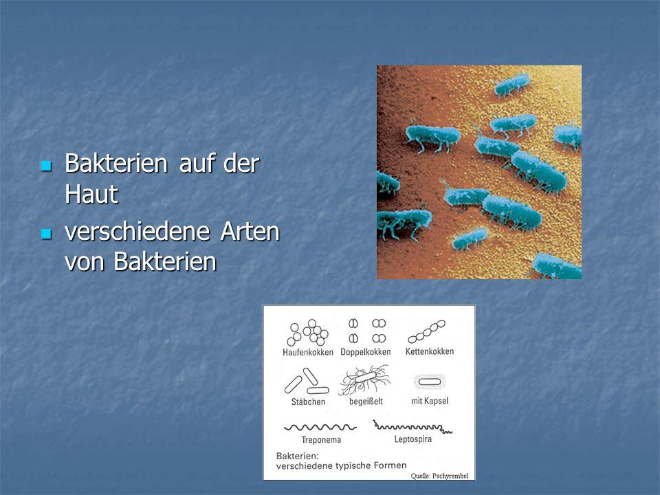 Bakterien auf der Haut Bakterien auf der Haut verschiedene Arten von Bakterien verschiedene Arten von Bakterien