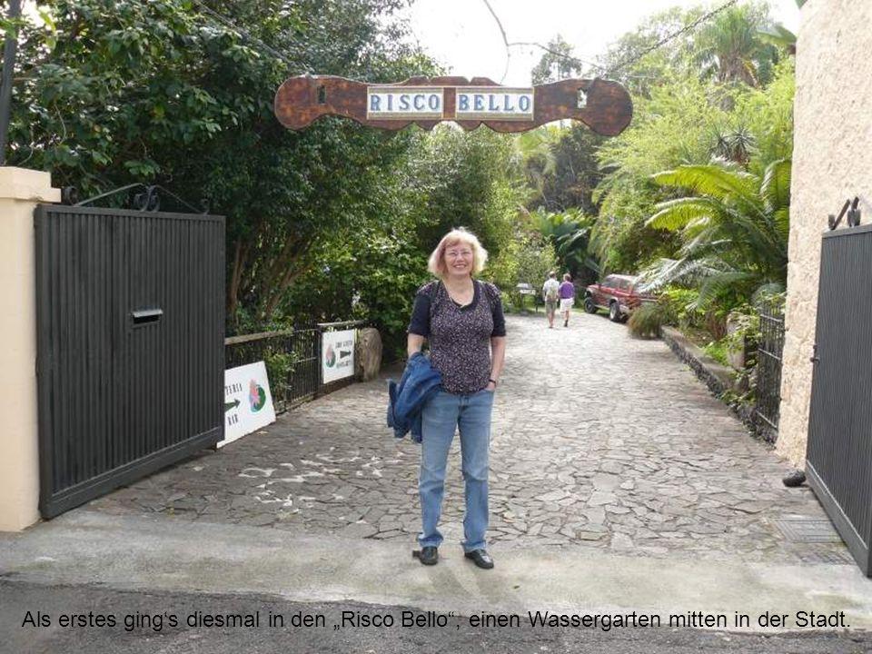 Als erstes gings diesmal in den Risco Bello, einen Wassergarten mitten in der Stadt.