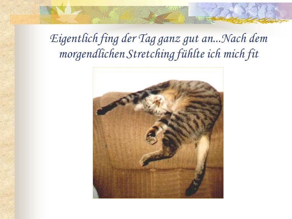 Katzen haben es wirklich nicht leicht!! Das harte Leben eines Stubentigers...