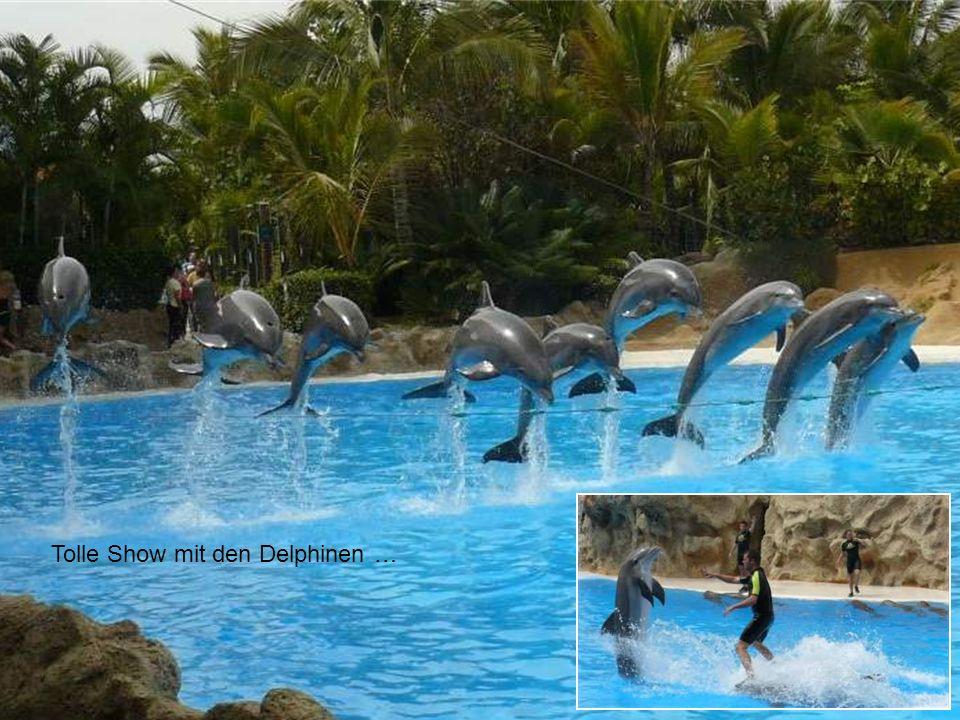 Tolle Show mit den Delphinen …
