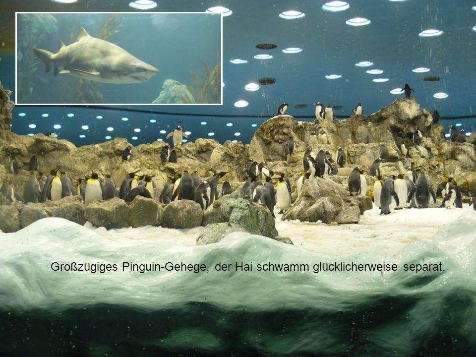 Großzügiges Pinguin-Gehege, der Hai schwamm glücklicherweise separat.