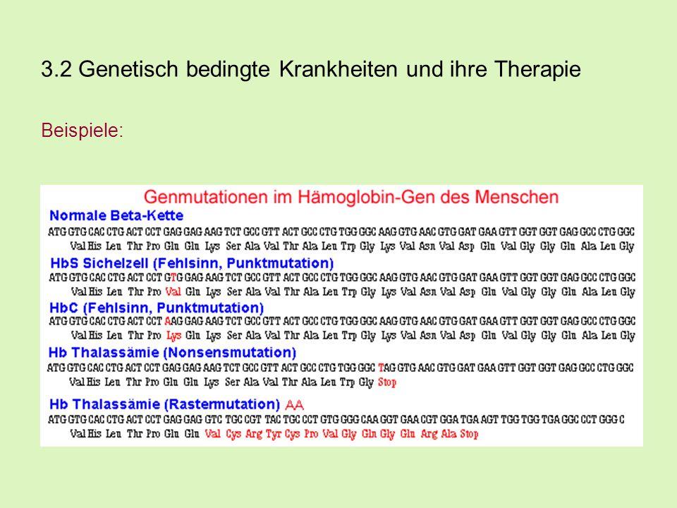 3.2 Genetisch bedingte Krankheiten und ihre Therapie Beispiele: