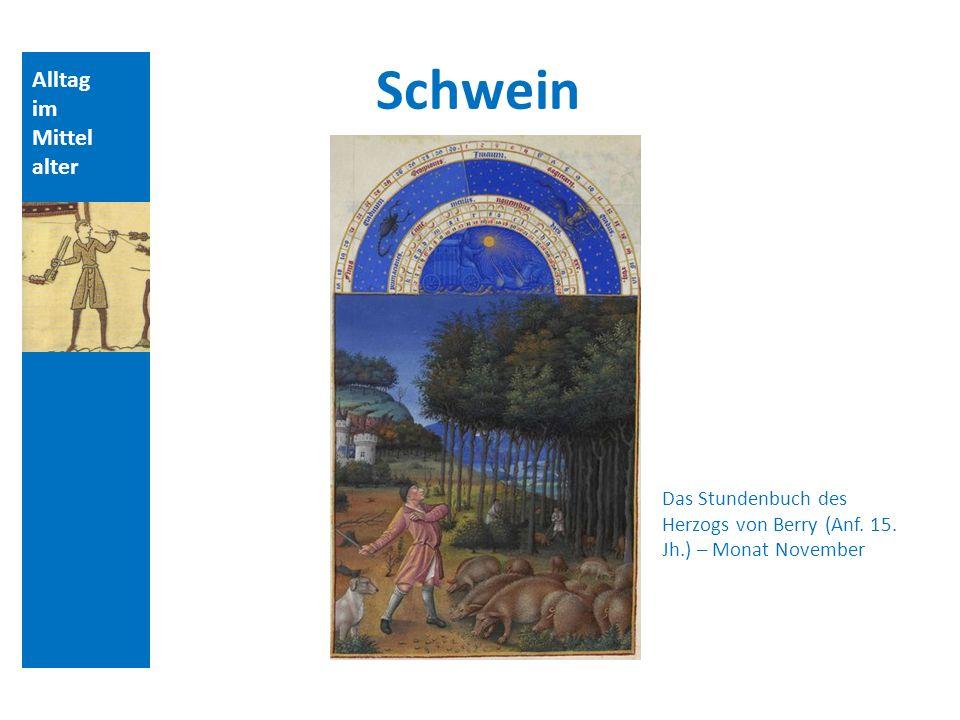 Alltag im Mittel alter Das Stundenbuch des Herzogs von Berry (Anf. 15. Jh.) – Monat November Schwein