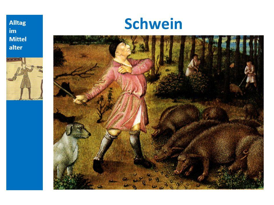 Alltag im Mittel alter Schwein