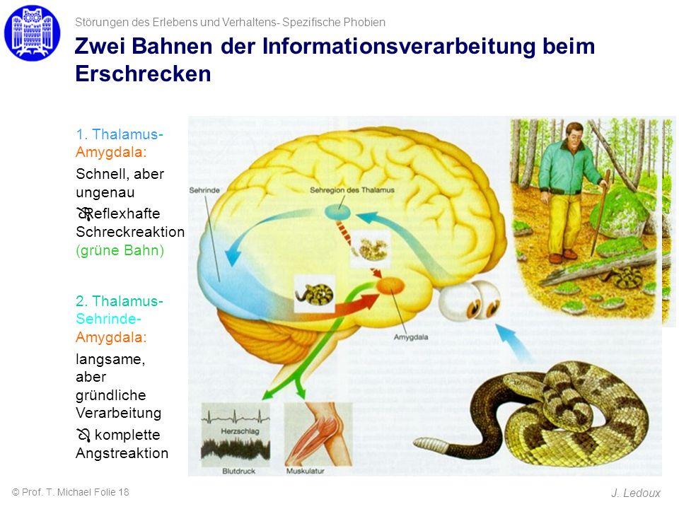 Störungen des Erlebens und Verhaltens- Spezifische Phobien J. Ledoux 1. Thalamus- Amygdala: Schnell, aber ungenau ÔReflexhafte Schreckreaktion (grüne