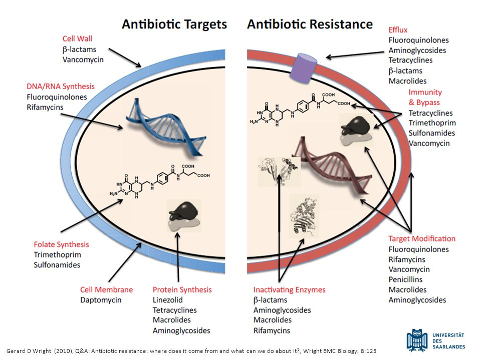 Gerard D Wright (2010), Q&A: Antibiotic resistance: where does it come from and what can we do about it?, Wright BMC Biology. 8:123