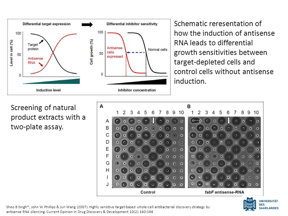 Schematic reresentation of how the induction of antisense RNA leads to differential growth sensitivities between target-depleted cells and control cel