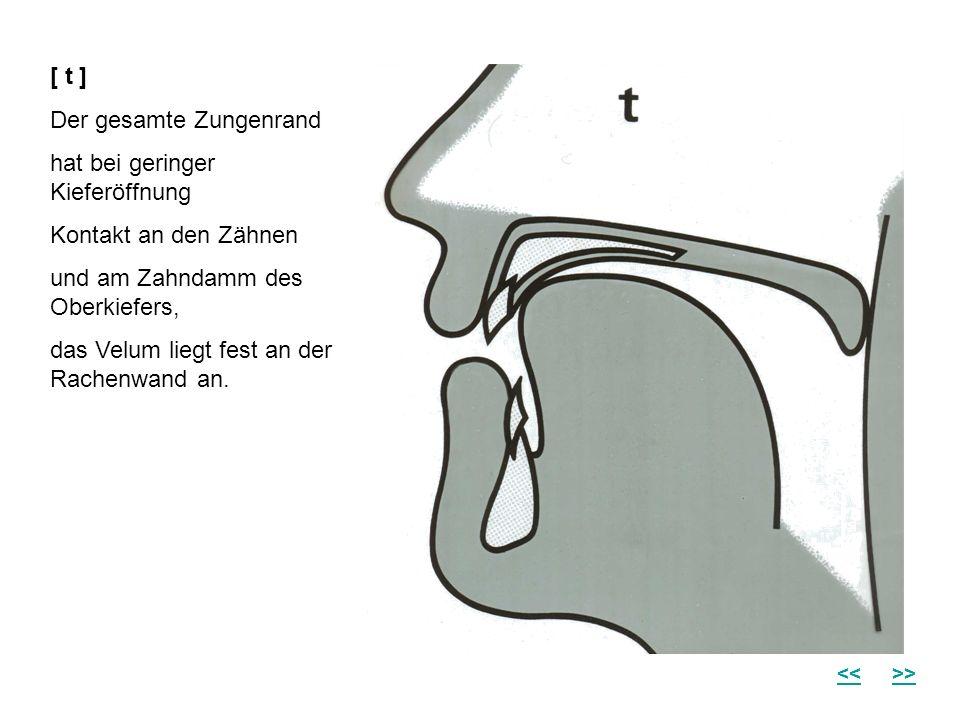 [ t ] Der gesamte Zungenrand hat bei geringer Kieferöffnung Kontakt an den Zähnen und am Zahndamm des Oberkiefers, das Velum liegt fest an der Rachenw