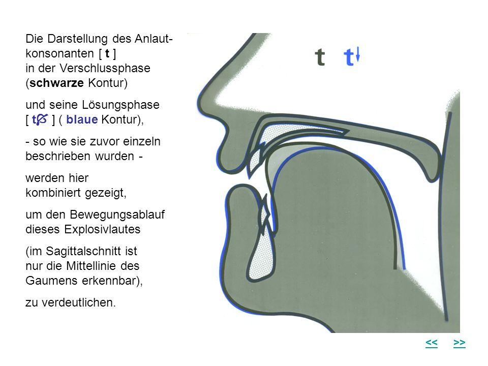 Die Darstellung des Anlaut- konsonanten [ t ] in der Verschlussphase (schwarze Kontur) und seine Lösungsphase [ t ] ( blaue Kontur), - so wie sie zuvo