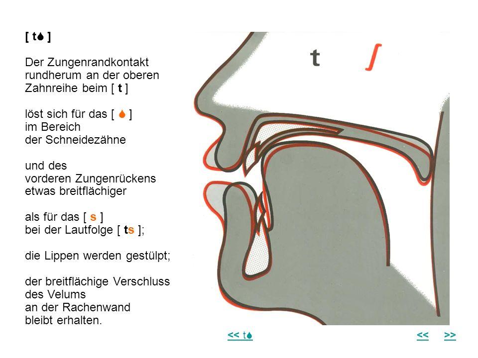 [ t ] Der Zungenrandkontakt rundherum an der oberen Zahnreihe beim [ t ] löst sich für das [ ] im Bereich der Schneidezähne und des vorderen Zungenrüc