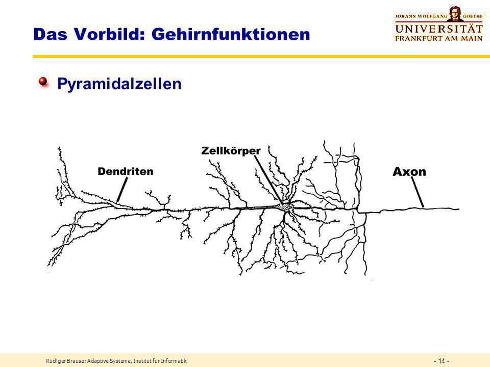Rüdiger Brause: Adaptive Systeme, Institut für Informatik - 13 - Das Vorbild: Gehirnfunktionen Neuronentypen a)-c) Pyramidenzellen f,h) Stern/Glia zellen