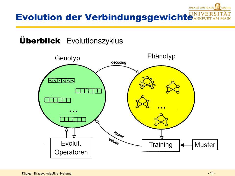 Rüdiger Brause: Adaptive Systeme - 18 - Evolution der Verbindungsgewichte Generation 0 Initialisierung der g i : Weise den Verbindungen in der Anfangs