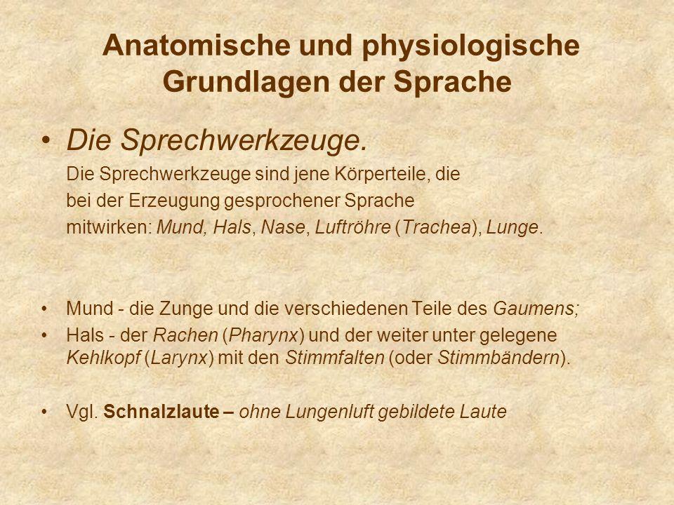 Anatomische und physiologische Grundlagen der Sprache Die Sprechwerkzeuge. Die Sprechwerkzeuge sind jene Körperteile, die bei der Erzeugung gesprochen