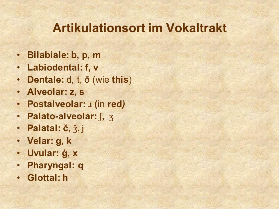 Artikulationsort im Vokaltrakt Bilabiale: b, p, m Labiodental: f, v Dentale: d, t, ð (wie this) Alveolar: z, s Postalveolar: ɹ (in red) Palato-alveola