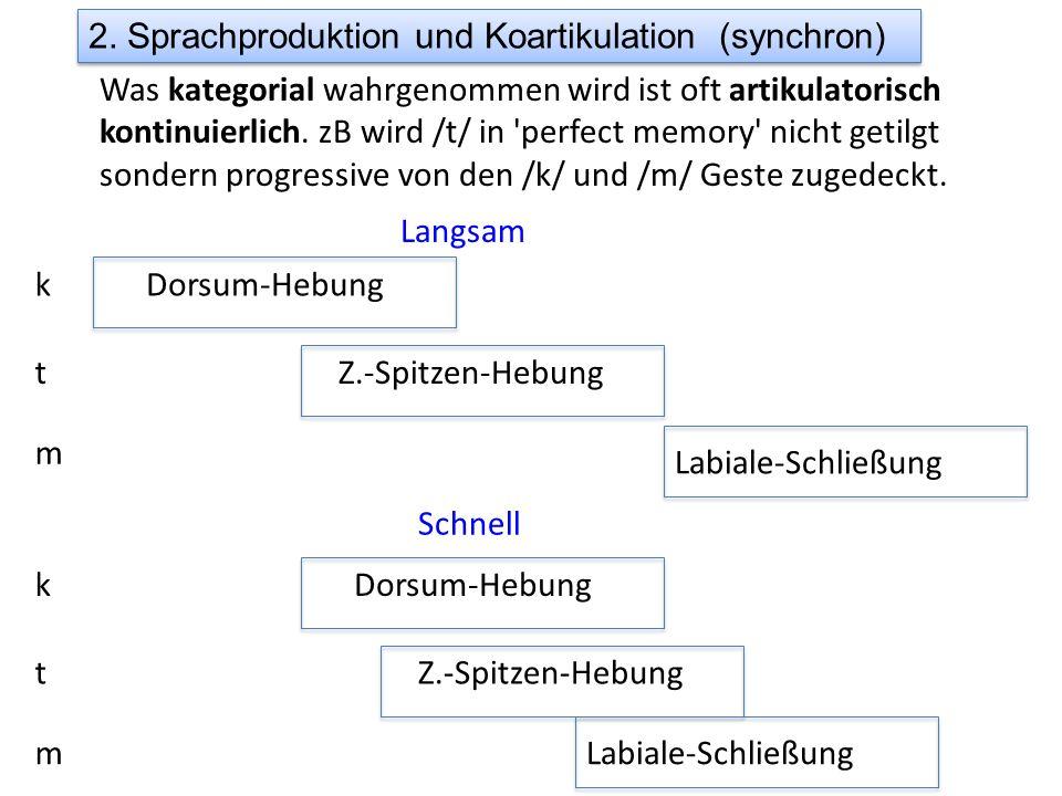 2. Sprachproduktion und Koartikulation (synchron) Was kategorial wahrgenommen wird ist oft artikulatorisch kontinuierlich. zB wird /t/ in 'perfect mem