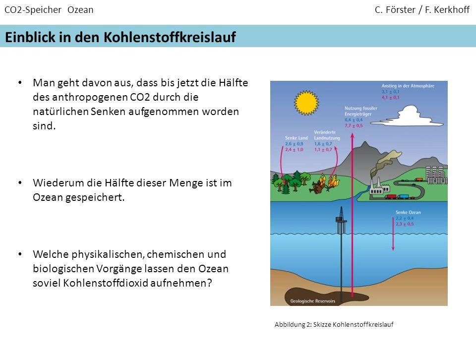CO2-Speicher Ozean C. Förster / F. Kerkhoff Einblick in den Kohlenstoffkreislauf Man geht davon aus, dass bis jetzt die Hälfte des anthropogenen CO2 d