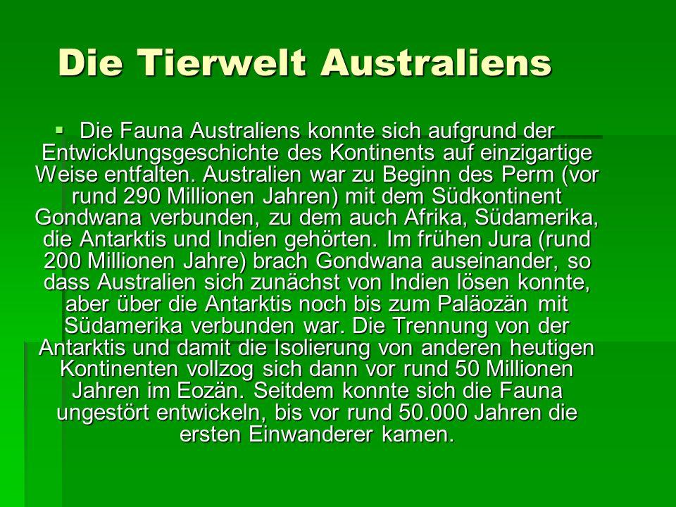 Die Tierwelt Australiens Die Tierwelt Australiens Die Fauna Australiens konnte sich aufgrund der Entwicklungsgeschichte des Kontinents auf einzigartig