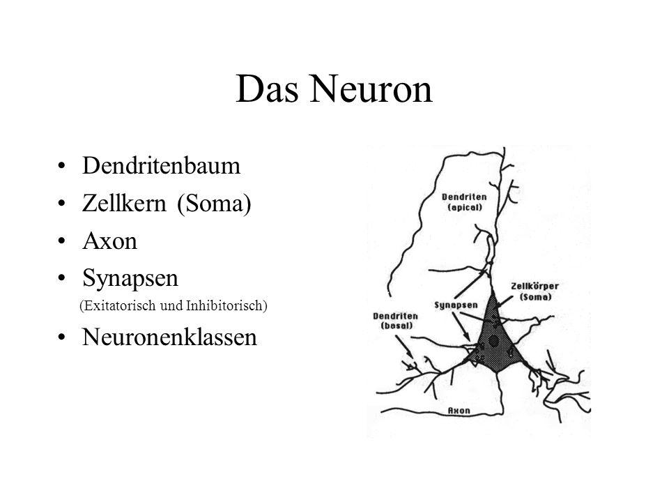 Das Neuron Dendritenbaum Zellkern (Soma) Axon Synapsen (Exitatorisch und Inhibitorisch) Neuronenklassen