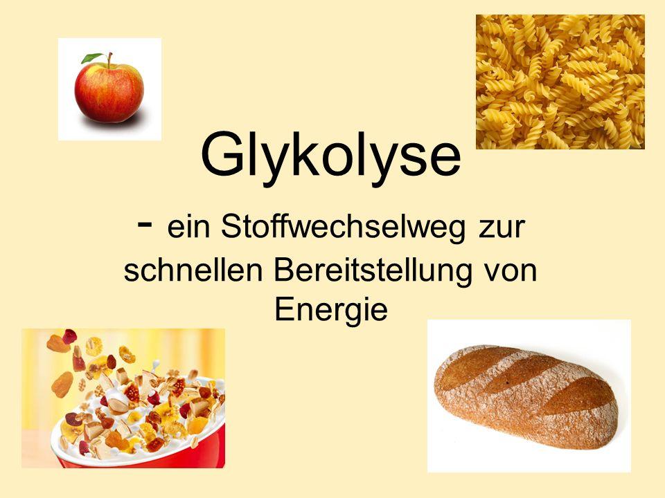 Glykolyse - ein Stoffwechselweg zur schnellen Bereitstellung von Energie